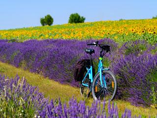 S kolesom po Provansi