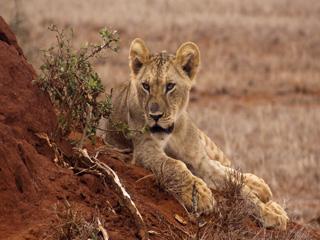 Kenija - safari, Masaji in počitnice