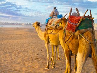 Jug Maroka - divje podobe Atlantika